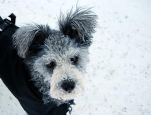 Min snö-prinsessa Tira