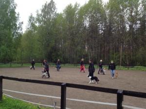 Teamet på Skutans gård