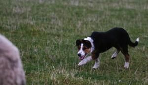 Igår var Kalle ingen lycklig hund
