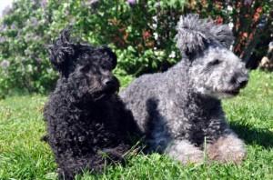 En färsk bild på Koala och Csar, älskade hund!