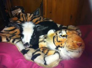 Jäääsper på sin coola Tigerpläd!