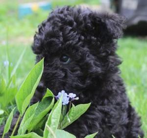 Ego Dog's Amazing Twinkle Little Star, foto Elin B