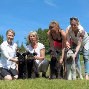 4 av 5 valpar från C kullen, efter Yeba och Aramis. Från vänster Cathy, Chloe, Casey och Cooper!